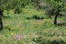 Prairie d'Agrigente