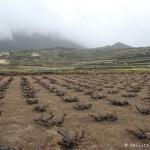 Vignobles de Pantelleria