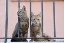 Gatti di Ragusa