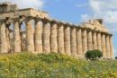 temple selinonte sicile