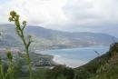 Sicilia. costa verso Tindari