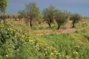 Sicilia, rovine di Tyndaris