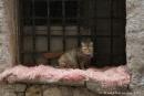 chat de Trapani